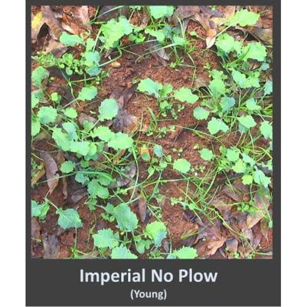Whitetail Institute Imperial No Plow